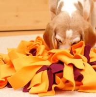 #WirBleibenZuhause: Der Schnüffelteppich