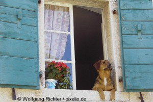 536009_original_R_K_B_by_Wolfgang_Richter_pixelio.de