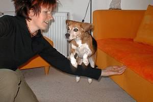 beagle-asta-armsprung-02