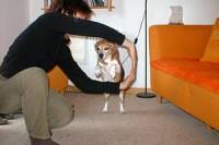beagle-asta-armsprung-05