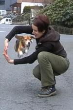 beagle-asta-armsprung