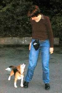 beagle-asta-fuss-gehen-02