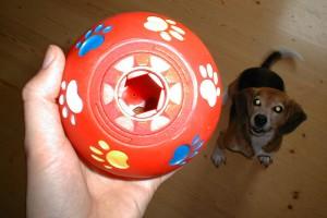 beagle-asta-futterball-01