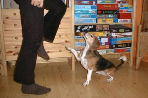 beagle-asta-steppen-04