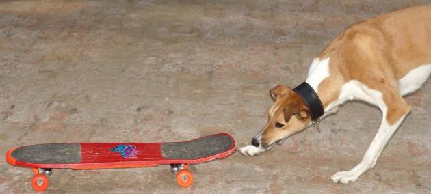 benda-skateboard