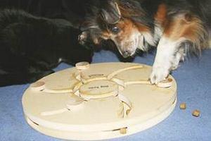 dog-turbo-rudi