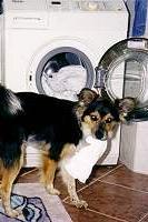 gino-waschmaschine