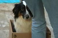 hund-im-karton