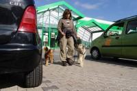 hundestunde-fussgehen-zwischen-autos