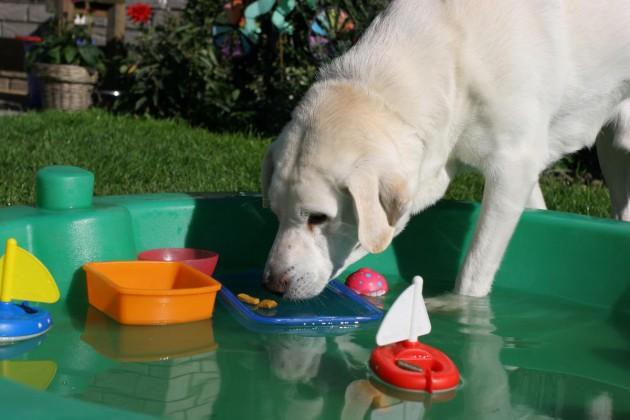 Coole tipps für heiße tage spass mit hund