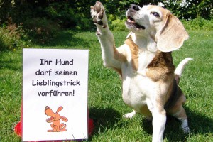 rally-obedience-asta-lieblingstrick
