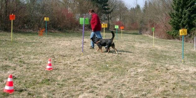 rally-obedience-parcours-wiese