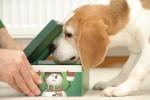 schachtel-oeffnen-beagle-birte-03