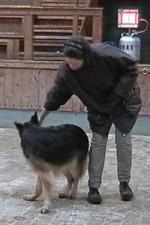 schaeferhund-nessy-drehung-03