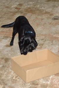 schwarzer-hund-karton-01