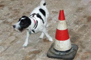 terrier-pylone