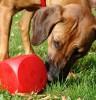 Hunde artgerecht beschäftigen – wieviel und was tut gut?