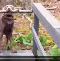 Ist Ihr Hund ein Problemlöser?