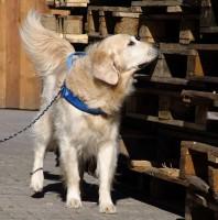 Tapetenwechsel: Erkundungs-Ausflüge mit Hund