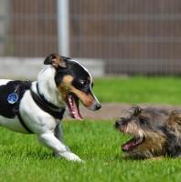 Hunde unter sich – Tipps für gutes Spiel