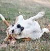 Was braucht (m)ein Hund zum Glücklichsein?