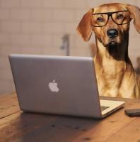Zuhause lernen – der Wissensquellen-Check