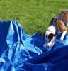 SPASS-MIT-HUND im TV: Wasserspiele (nicht nur) für Tierheim-Hunde