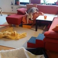 #WirBleibenZuhause: Indoor-Schnueffel-Fitnesscenter