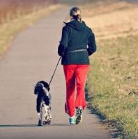 Jog your Dog: Laufprogramm für Hund und Mensch