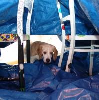Tunnels und Zelte
