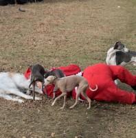 Hundverrückt durch den Winter
