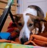 Online: Hundebeschäftigung – artgerecht und alltagstauglich