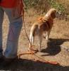 Schöner spazierengehen – Tipps und Ideen für Menschen mit Hund (online)