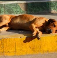 Tagesgestaltung nach Hunde-Art