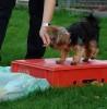 Dogility: Geschicklichkeit – Mutproben – Gehirnjogging