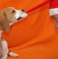 Mütze ziehen – nicht nur als Weihnachtskartenmotiv