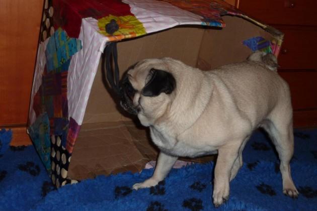 08-verschwundener-hund-mops-pia