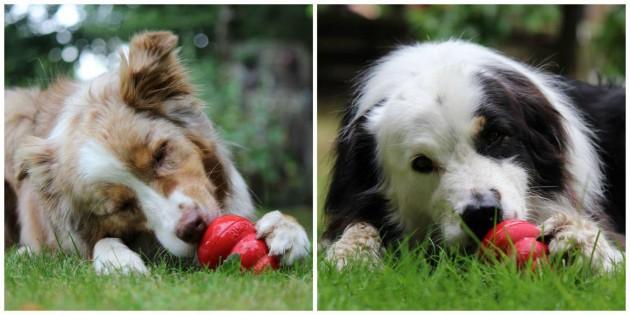 2-hunde-eiskong