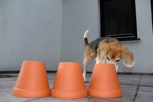 beagle-asta-blumentopf-01