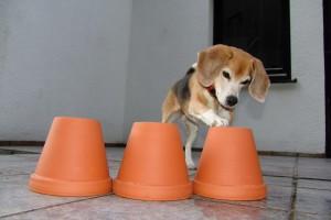 beagle-asta-blumentopf-02