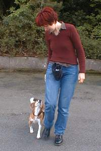 beagle-asta-fuss-gehen-01