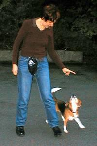 beagle-asta-fuss-gehen-03