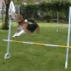 Basisanleitung: Springen lernen
