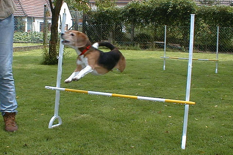 Dog Agility Training Basics