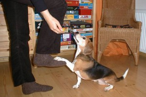 beagle-asta-steppen-03