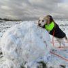 Die Winterschnüffellandschaftsbauer-Challenge
