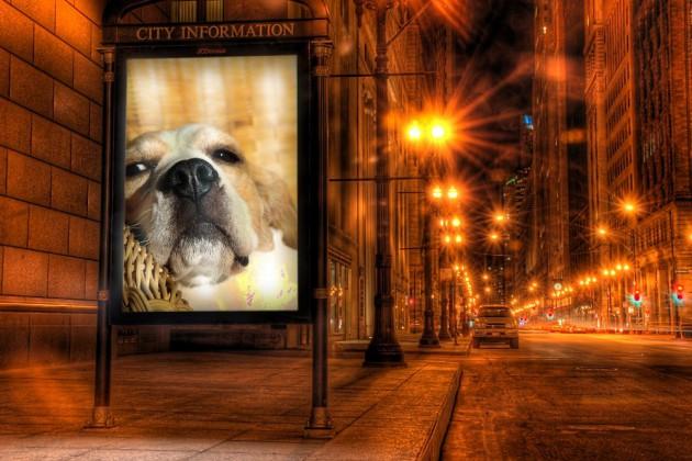 beagle-birte-photofunia-schautafel