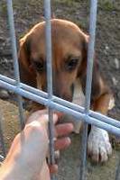 beagle-hinter-gitter