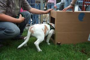beagle-kartontunnel