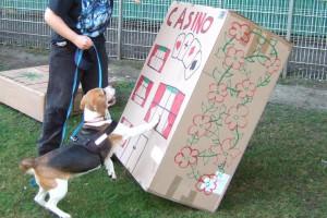 beagle-ricky-godzilla